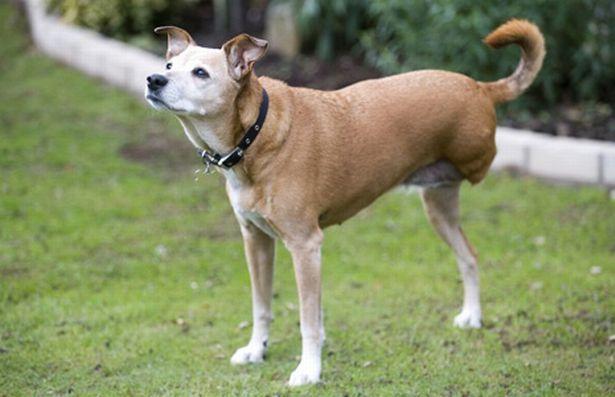 poppy-the-three-legged-dog-884215043